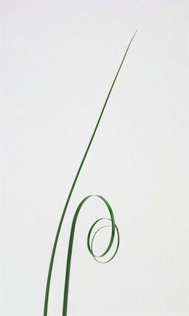 Green Bear Grass