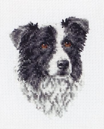 Anchor Border Collie Cross Stitch Kit: