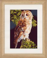 Owl (Aida,B) Counted Cross Stitch Kit by Lanarte