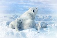 Hoffman Polar Bears Panel